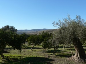 Lecrín Valley orange and olive groves
